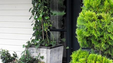 Front Entrance Planting
