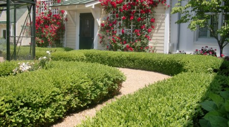 Boxwood Hedge and Gravel Path