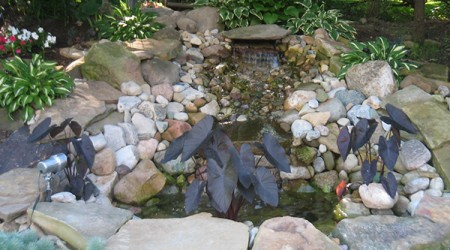 Planting compliments small pond