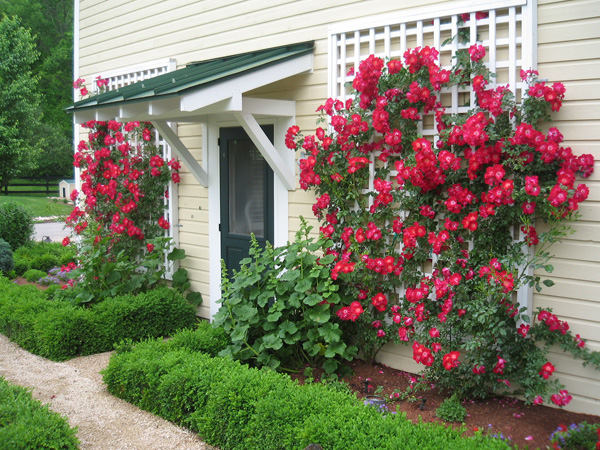 Plantings spellacy 39 s turf lawn inc - Climbing rose trellis ...
